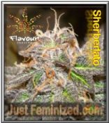 Flavour Chasers Sherblato is a potent Indica Sativa Cannabis Strain